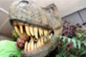 Stan the T-Rex the star of new and exciting dinosaur exhibition...